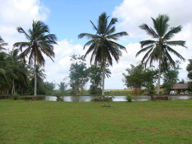 brasilien marajo palmen