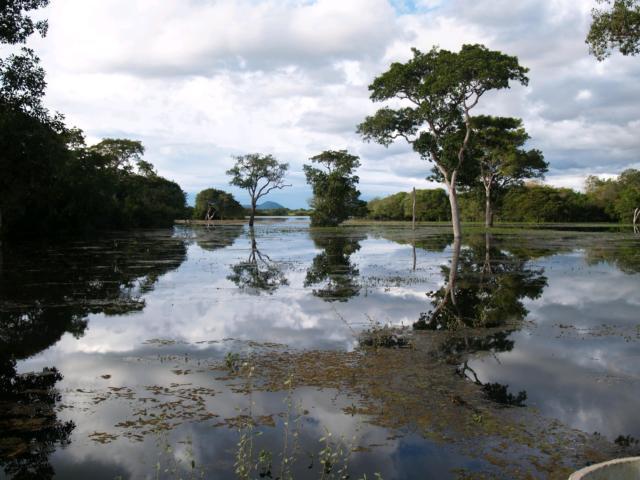 brasilien rio mutum baeume