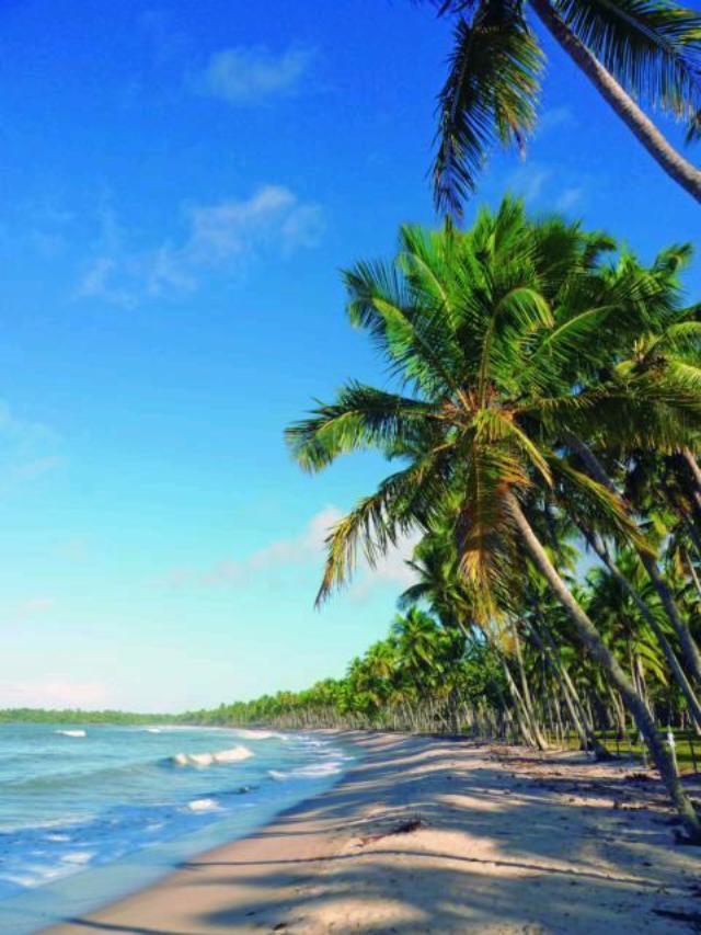 brasilien mangue seco palme